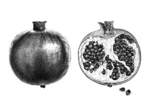 Pomegranate_web